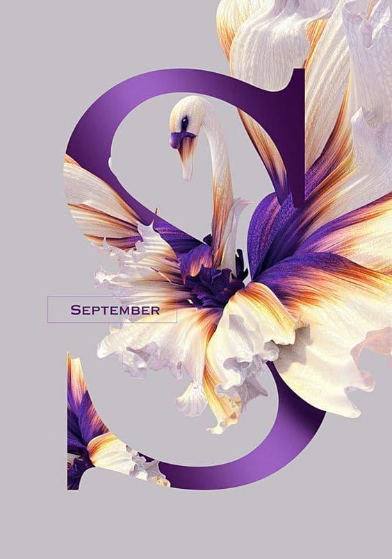 fialova grafika z kvetov